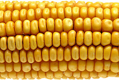 corn_by_trimmer_741.jpg