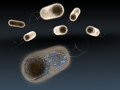 escherichia_coli_by_juliendn.jpg