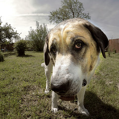 the_dog_by_dan65.jpg